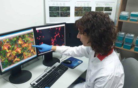 ניסוי ראשון מסוגו בעולם בטיפול במחלת ה-ALS באמצעות תאי אסטרוציטים