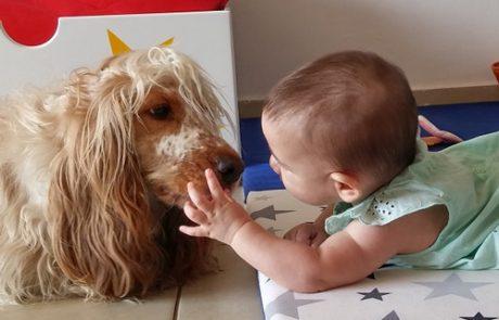 על תועלתה של מערכת היחסים בין האדם לכלב
