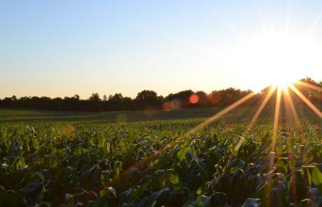 דשן אורגני חקלאות אורגנית