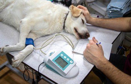 בריאות הכלב – איך יודעים אם החטיף לכלב בריא?